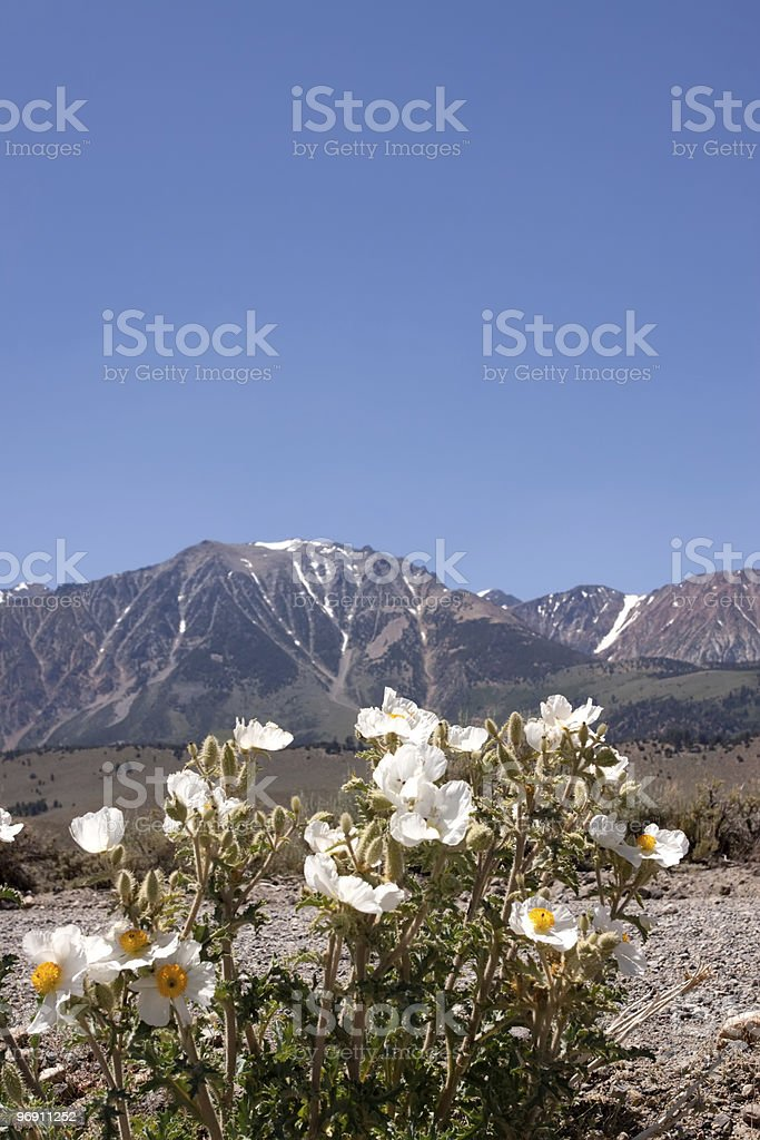 Sierra Nevada mountains with snowy peaks royalty-free stock photo