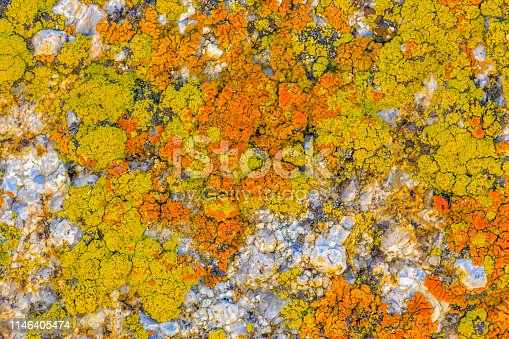 Lichen found in the Alabama Hills area and the Sierra Nevada countryside in the state of California