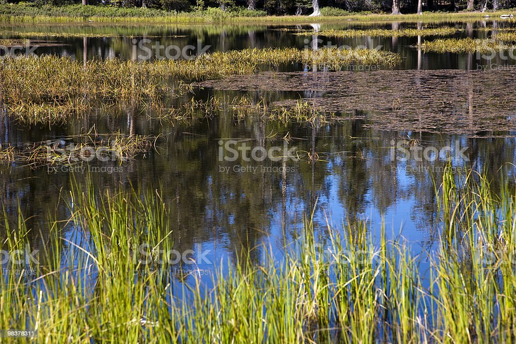 Siesta Lake royalty-free stock photo