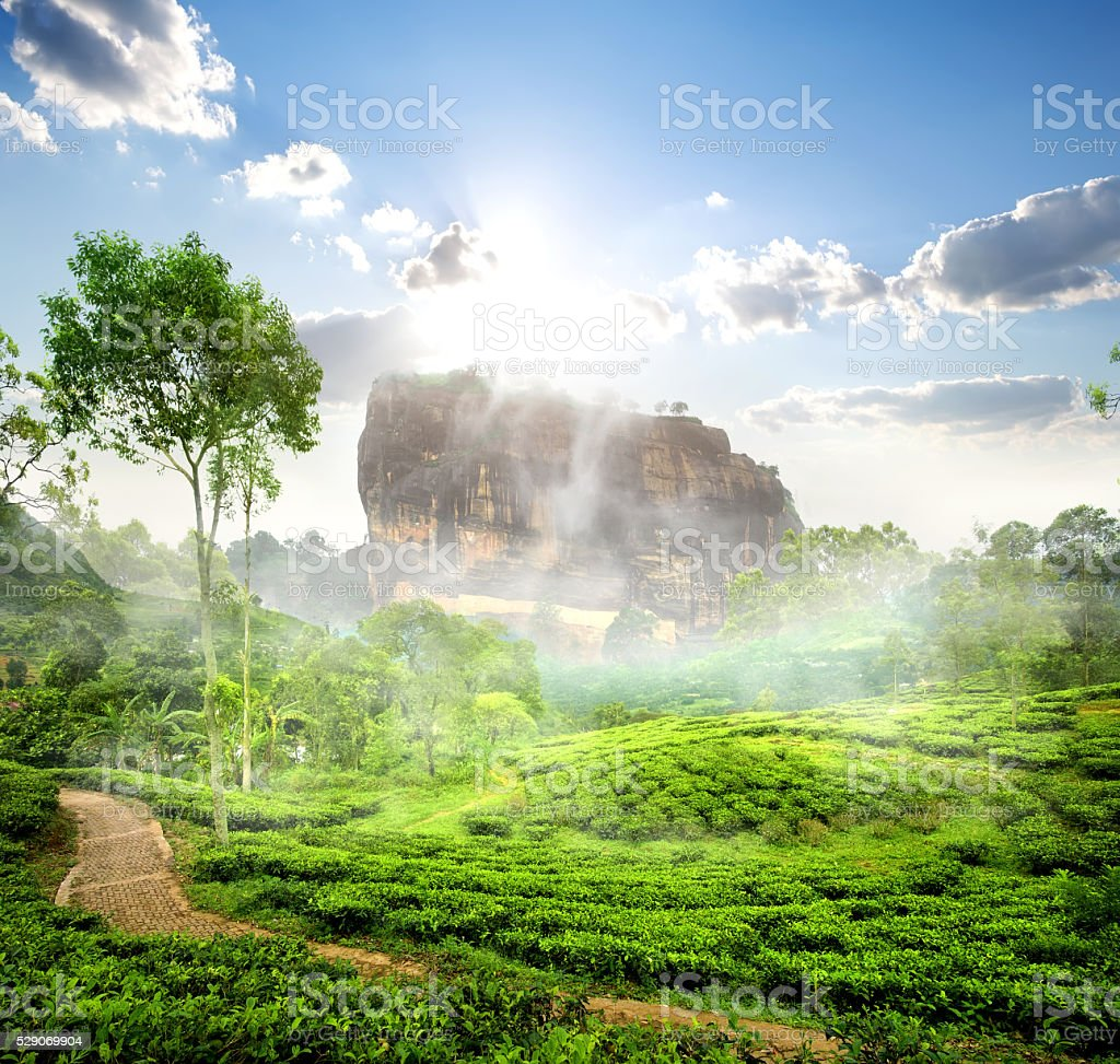 Sigiriya and tea field stock photo