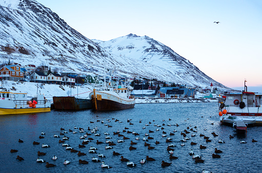 Siglufjordur harbor with fishing boats at dawn in winter