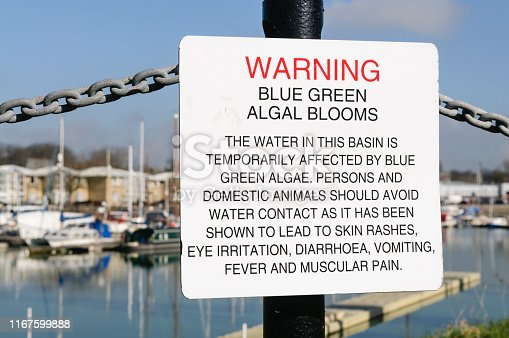 istock Sign at Preston Marina warning the public about the dangers of Blue-Green algae 1167599888