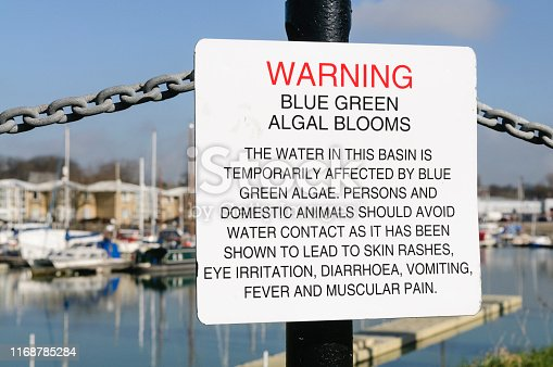 istock Sign at Preston Marina warning the public about the dangers of Blue-Green algae 1168785284