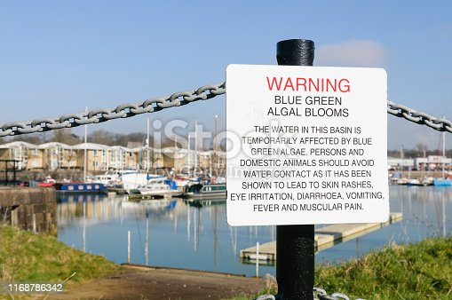 istock Sign at Preston Marina warning the public about the dangers of Blue-Green algae 1168786342