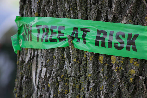 sign on a tree warning of emerald ash borer damage - dept stock pictures, royalty-free photos & images