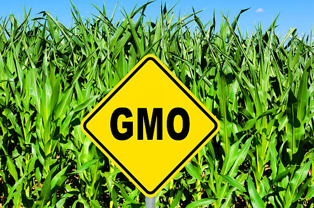 gmo sign - genetic modification stock photos and pictures