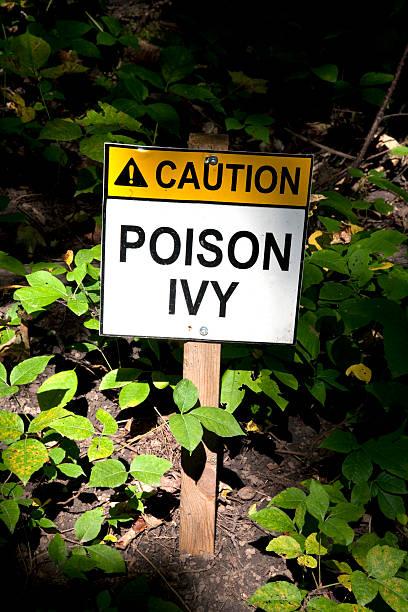 schild giftsumach - poison ivy pflanzen stock-fotos und bilder