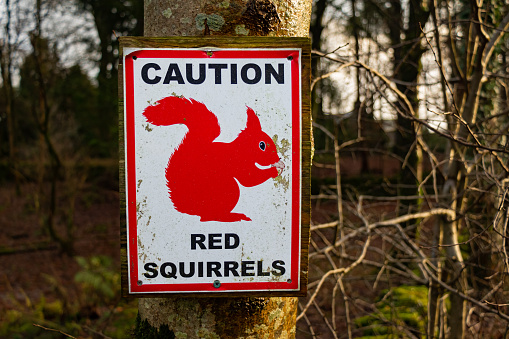 Sign warning caution due to endangered red squirrels in the area, Galloway, Scotland