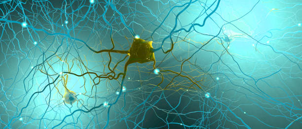 Signal transmitting neurons or nerve cells- 3d illustration Signal transmitting neurons or nerve cells- 3d illustration neurology stock pictures, royalty-free photos & images