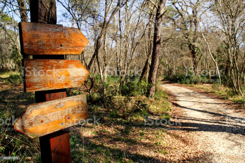 A signpost by the roadside in the nature of forest. Signpost along the road in a beautiful natural environment of the forest. royalty-free stock photo