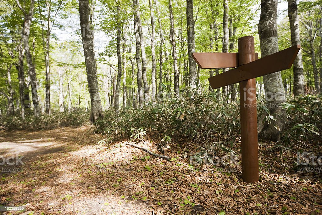 Signpost in a beech forest stock photo