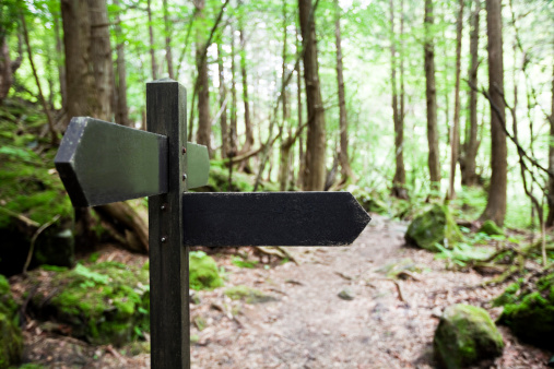 Signpost in a forest