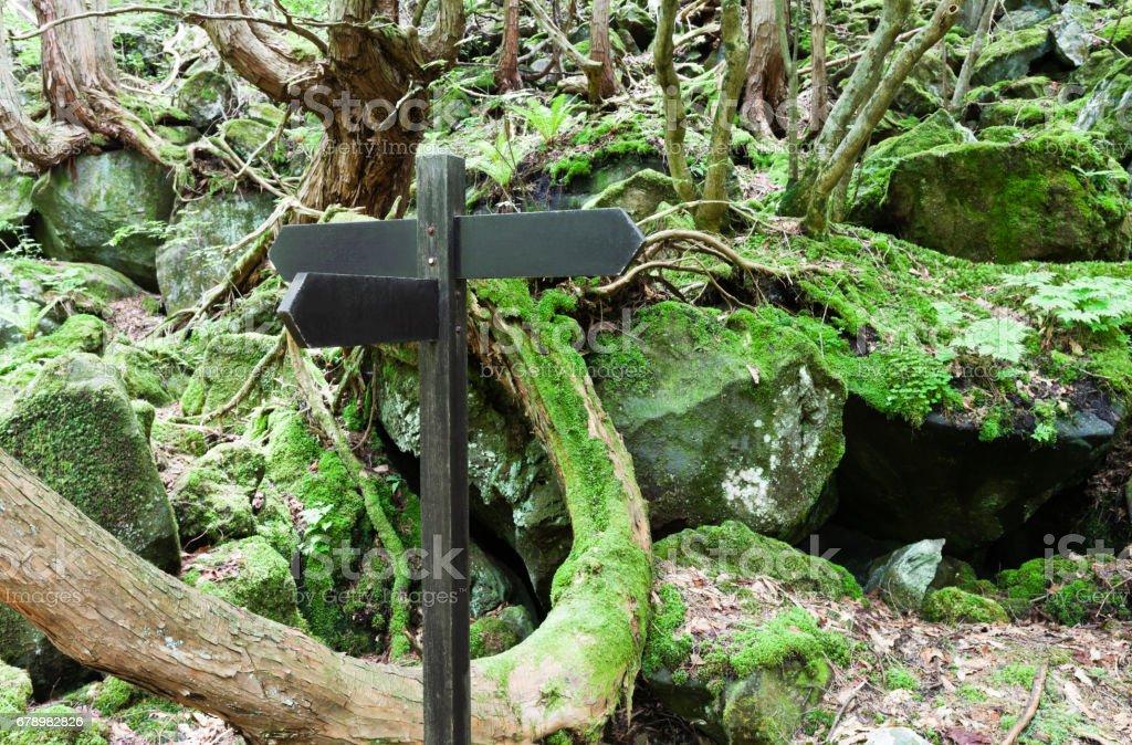 Panneau dans la forêt.   photo libre de droits