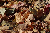 fallen dried leaves on the Ground