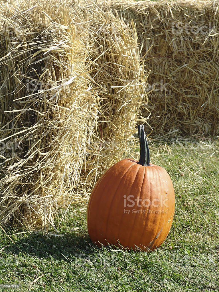 Signs of Autumn royalty-free stock photo