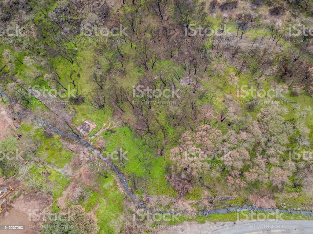 Signs of Life Amidst the Napa Fire Damage stock photo
