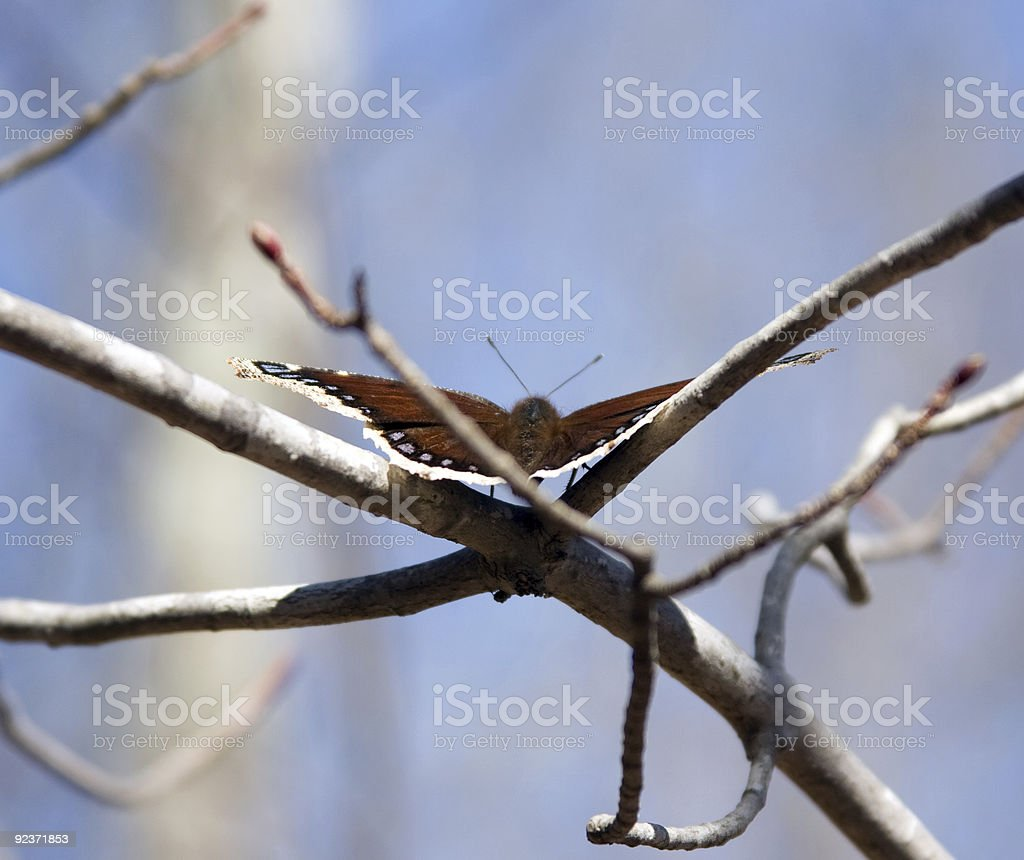 Signs  of Spring royalty-free stock photo