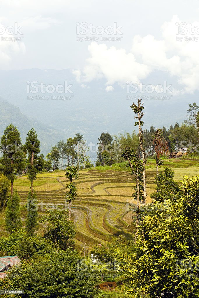 Sikkim Terraced Fields India royalty-free stock photo