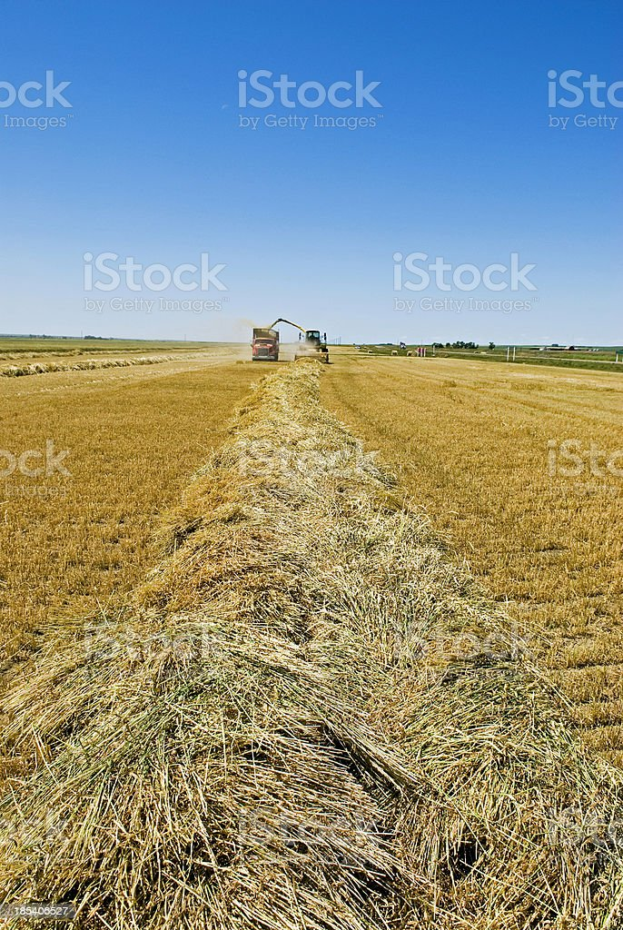 Silage crop royalty-free stock photo