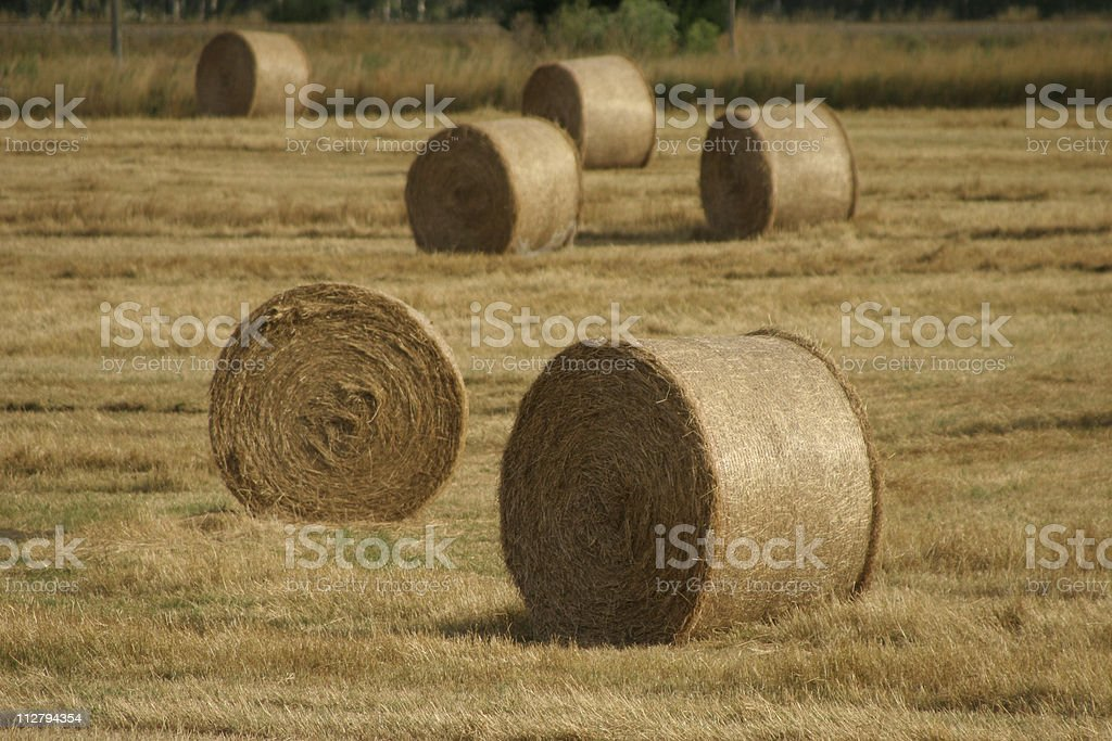 Silage in the sun royalty-free stock photo