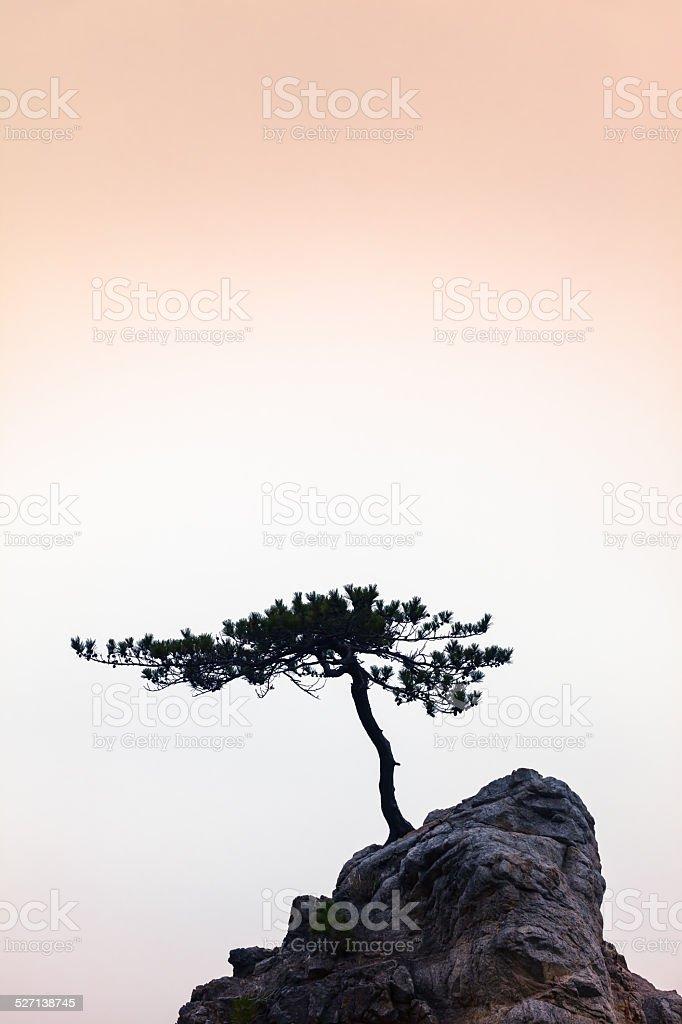 Silence - A Little Tree on a Little Rock stock photo
