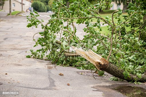 Silence after the storm. Fallen tree branches on the street.