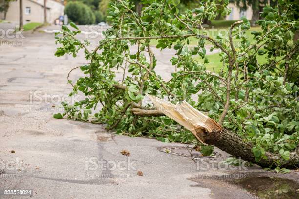 Photo of Silence after the storm. Fallen tree branches on the street.
