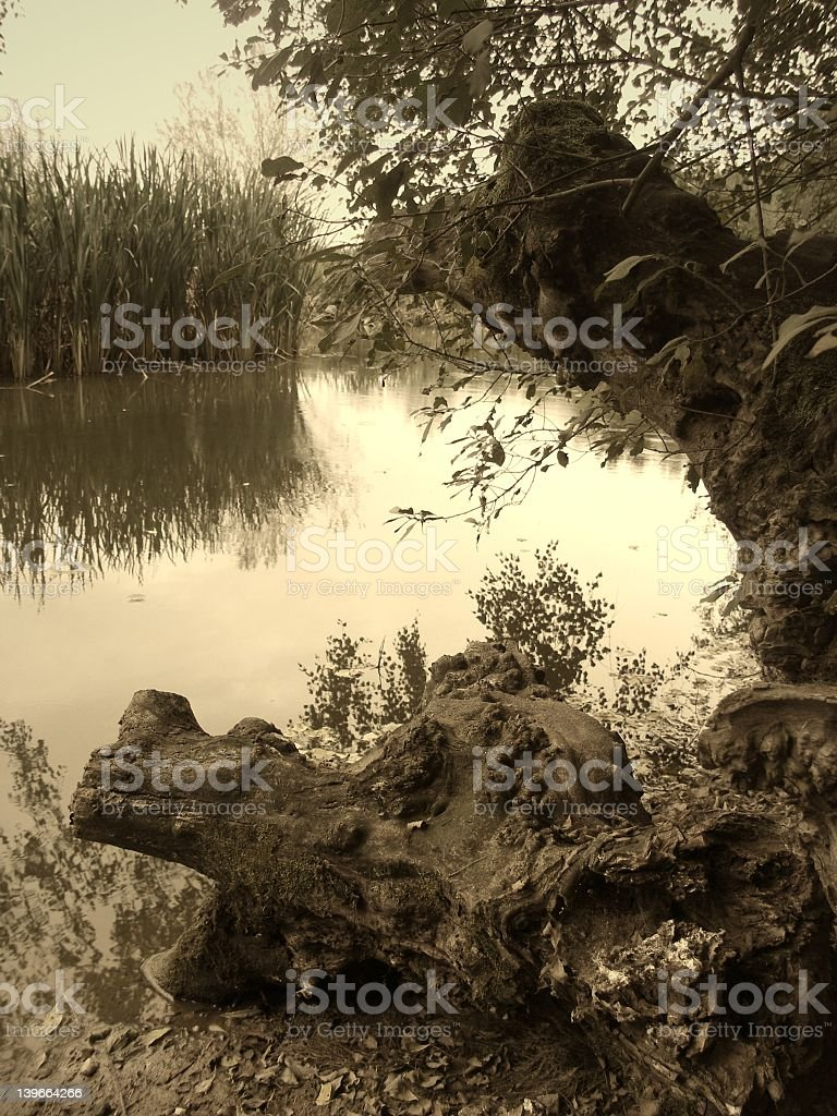 Silence on an old pond royalty-free stock photo