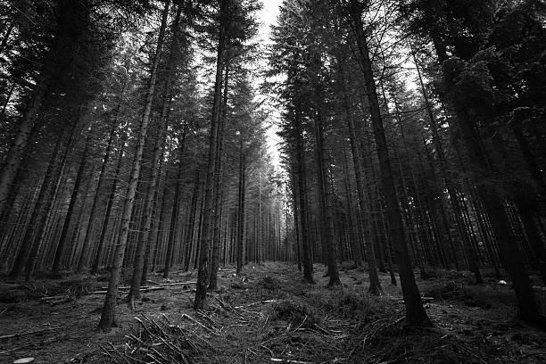 Silent e Foresta Incantata & bianco-nero - foto stock