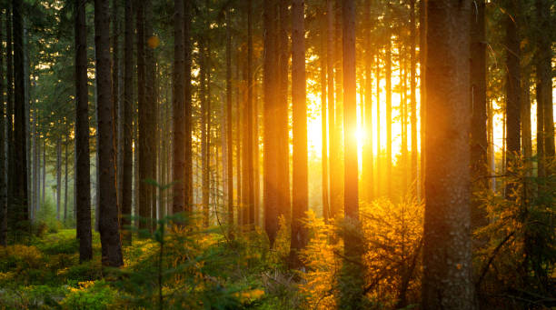 silent forest in spring with beautiful bright sun rays - wilderness stock pictures, royalty-free photos & images