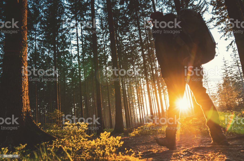 Silent Forest in spring with beautiful bright sun rays stock photo