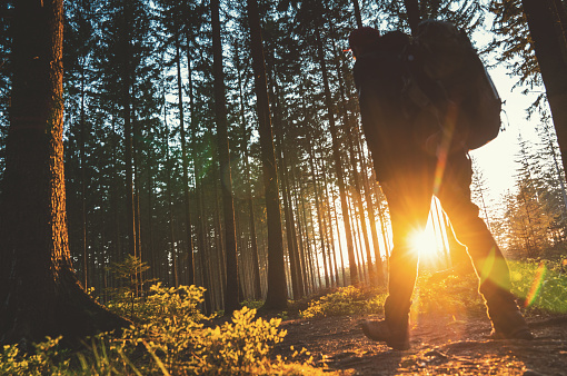 Silent Forest In Spring With Beautiful Bright Sun Rays Stock Photo - Download Image Now