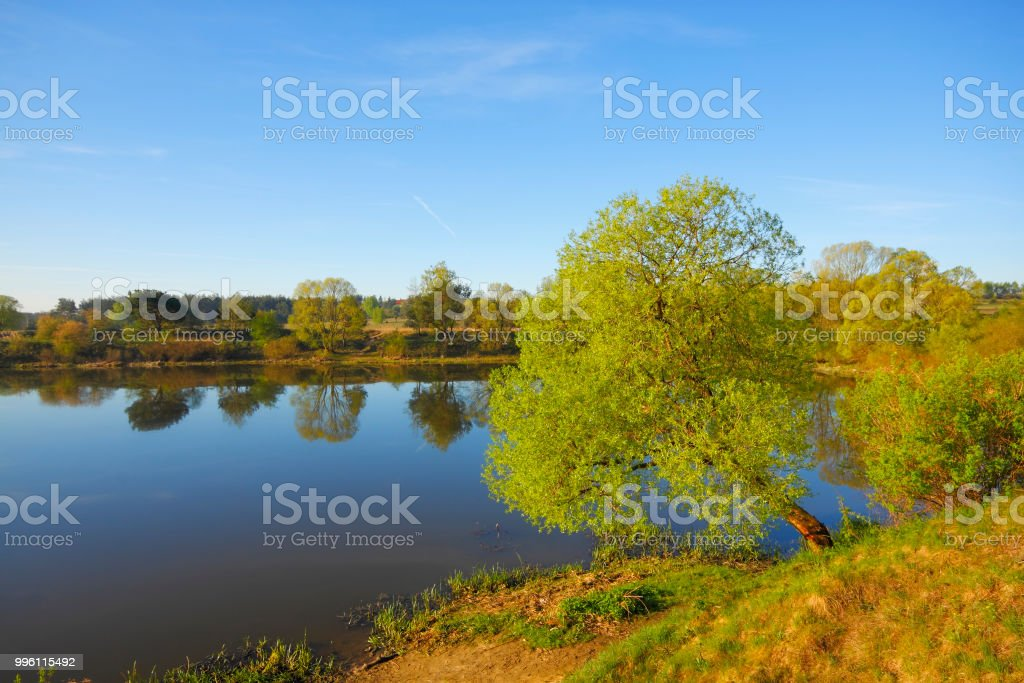 Silent lake with trees on lakeshore stock photo