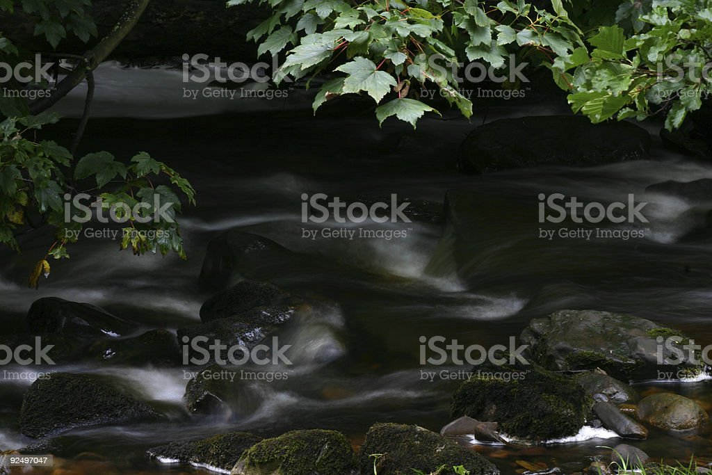 silent spring royalty-free stock photo
