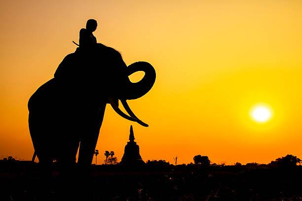 silhouette maßnahme von elefanten in ayutthaya-provinz, thailand - elefanten umriss stock-fotos und bilder