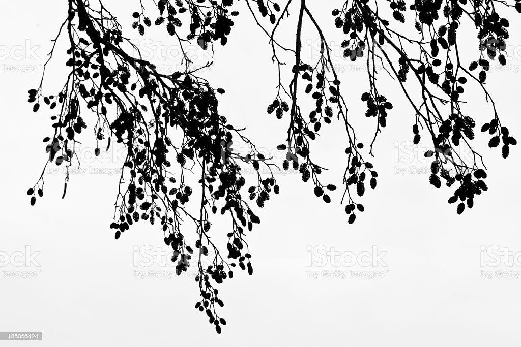 Silhouette Bare Tree Branches stock photo