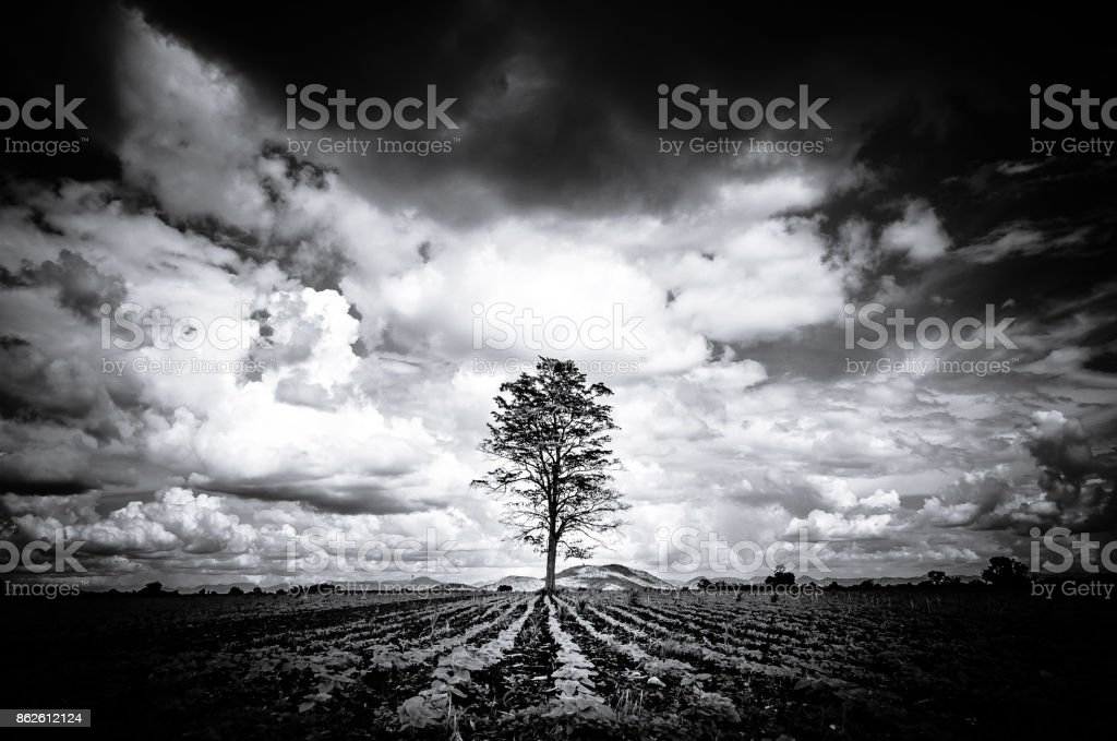 Silhouette Black and White Big tree Background Mountain, Dark Sky,...