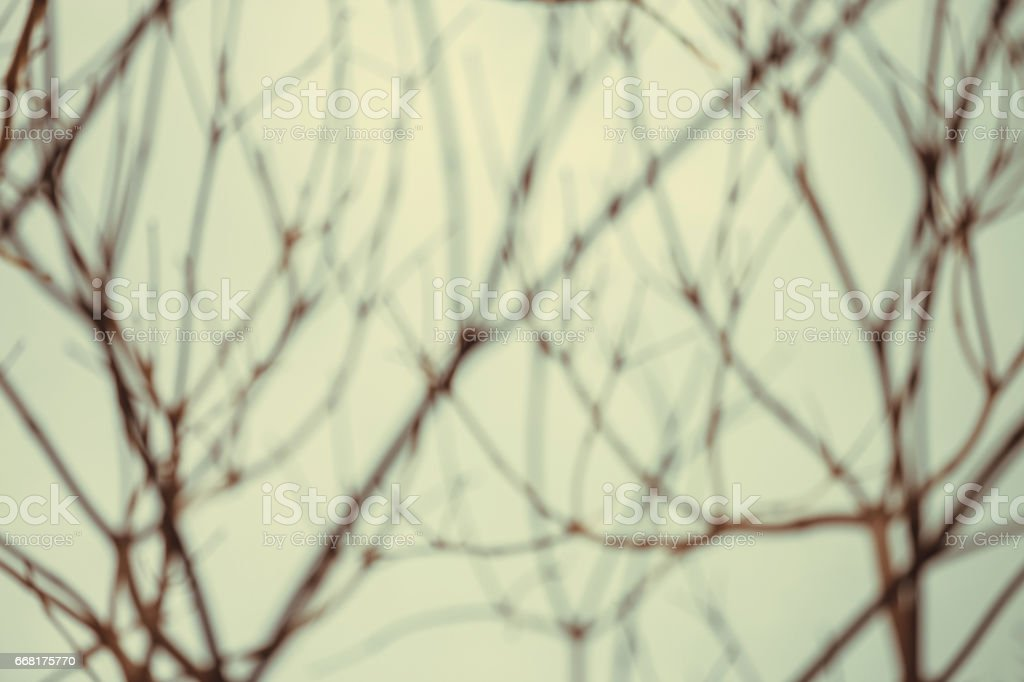 silhouette blur tree branches, abstract background. stock photo