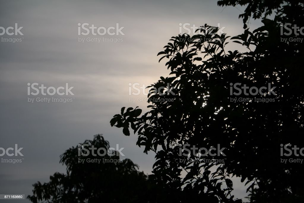 silhouette branch leaf of tree beautiful in the forest on sky background stock photo