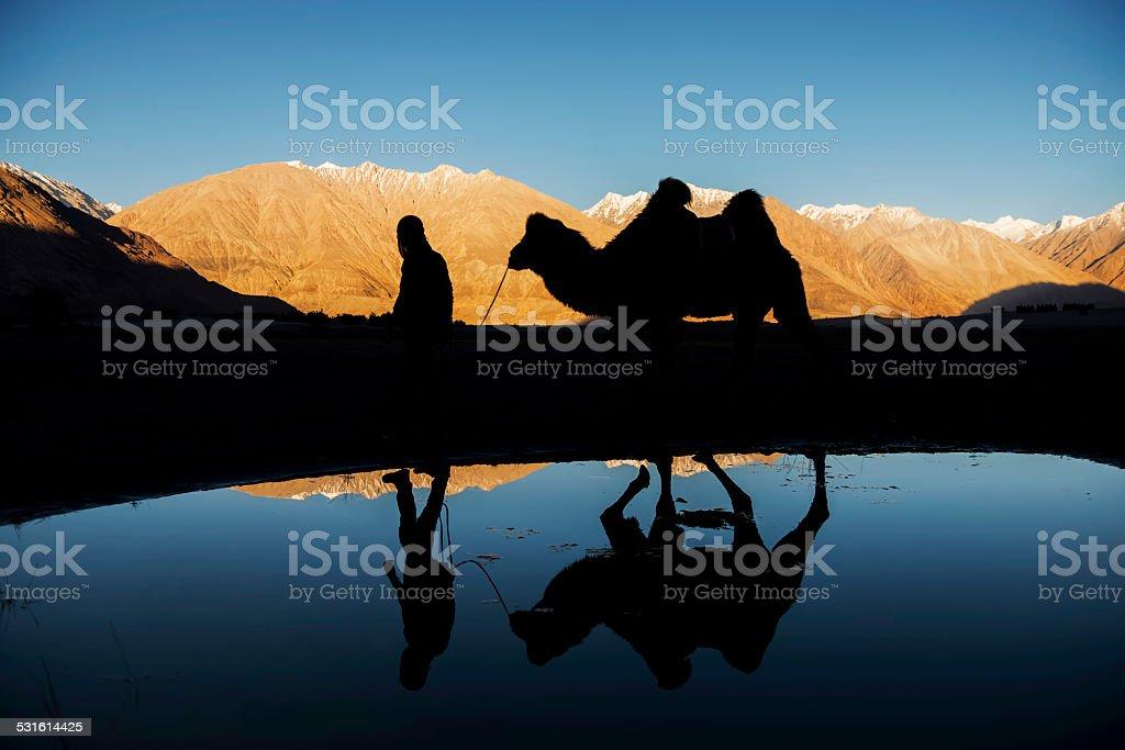 silhouette camel reflection and snow mountain range Nubra Valley stock photo