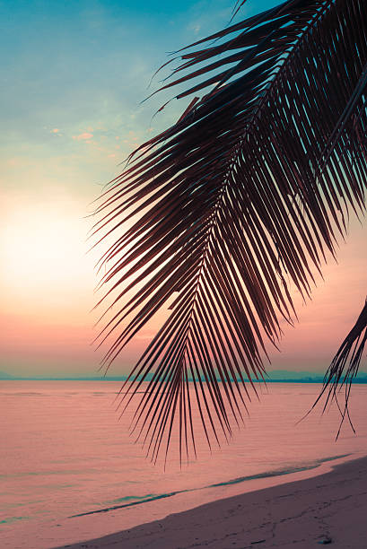 Silhouette Coconut Palm Trees On Beach At Sunset Vintage Tone Stock Photo