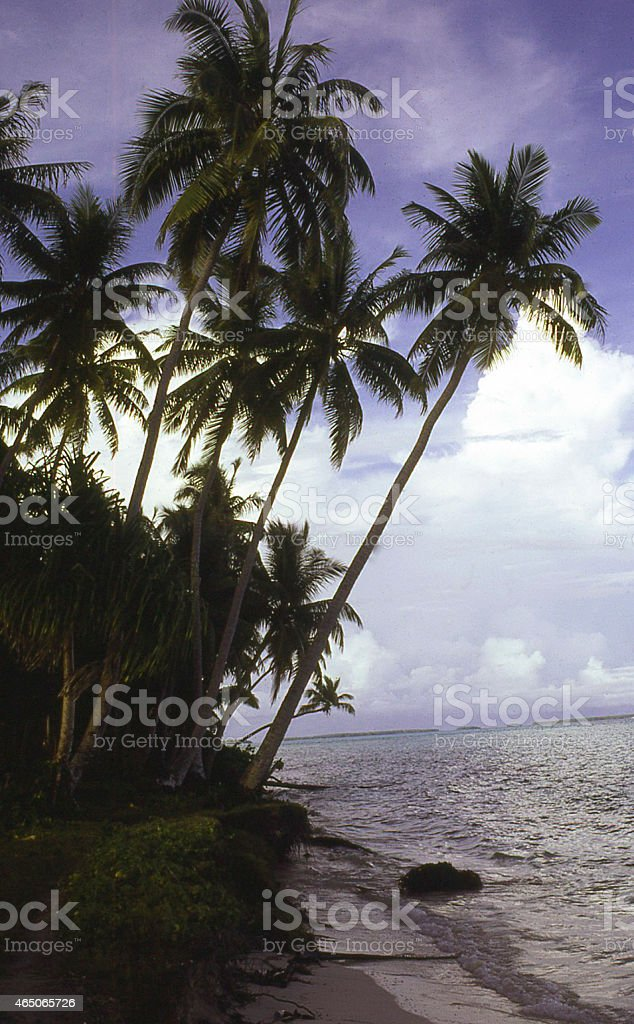 Silhouette Coconut Trees and Cumulus Clouds Pacific Ocean Marshall Islands stock photo