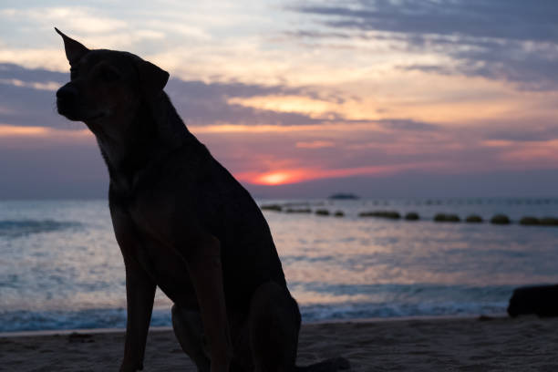 Silhouette dog on the beach picture id693332188?b=1&k=6&m=693332188&s=612x612&w=0&h=ti0y74ylyx4kdt8be6 fqmm3zl7uu9drpmstkahqi 4=
