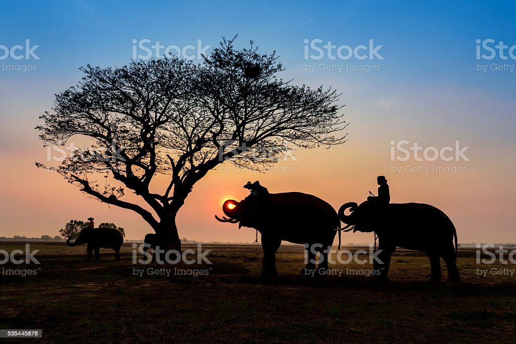 silhouette elephants standing under the tree at sun rise stock photo