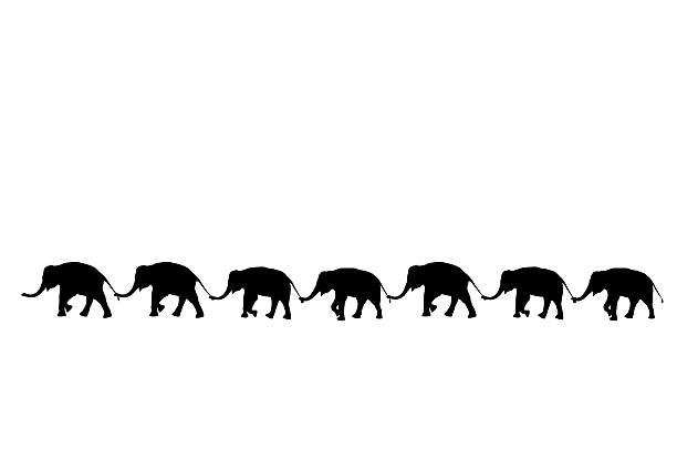 silhouette elephants use trunk hold family tail walking together - elefanten umriss stock-fotos und bilder