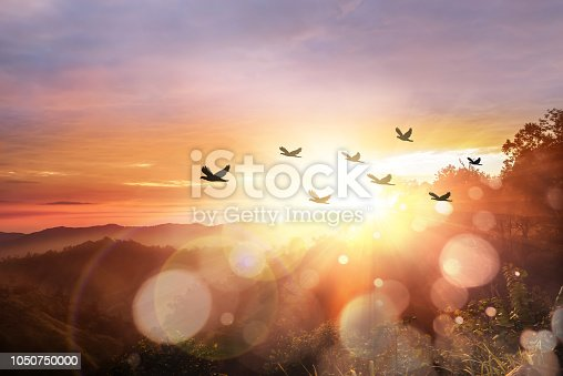 Silhouette flock of bird flying over mountain at sunrise, Mae Wong National Park, Thailand. Freedom concept. Flock of bird at sunrise