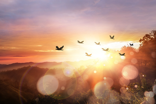 istock Silhouette flock of bird at sunrise 1050750000
