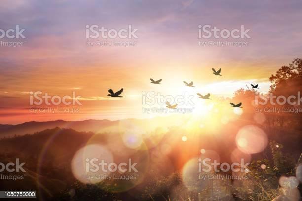 Silhouette flock of bird at sunrise picture id1050750000?b=1&k=6&m=1050750000&s=612x612&h=fv7sjcp6qsxhnkggrd4rztcynsvggl3j1zid1t1w xg=