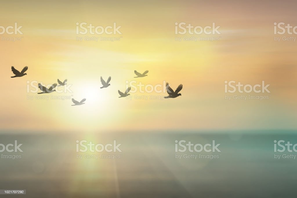 Silhouette free birds flying together in the  sunset sky. royalty-free stock photo