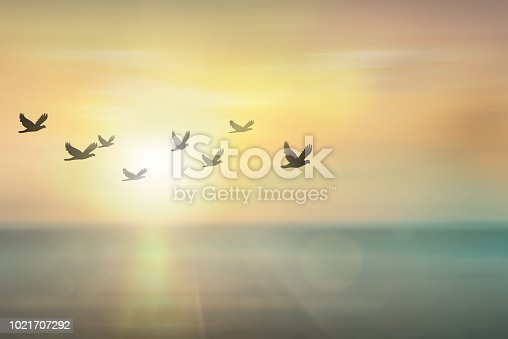 istock Silhouette free birds flying together in the  sunset sky. 1021707292